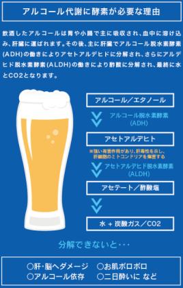 アルコール分解過程